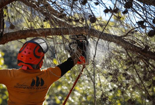Árboles y trabajos forestales
